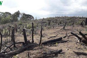 Gia Lai: Khởi tố vụ phá hơn 4 ha rừng ở Ia Pa