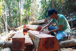 Quảng Nam: Lại nóng chuyện phá rừng phòng hộ