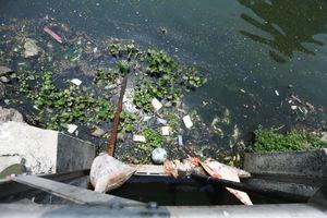 Cư dân quanh 'lá phổi xanh' Đà Nẵng sống chung với ô nhiễm