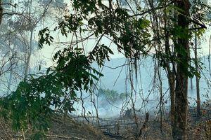 Nắng nóng, nhiều tỉnh miền núi phía bắc liên tiếp cháy rừng