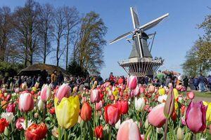 Keukenhof - Công viên hoa đẹp và rộng nhất thế giới tại Hà Lan