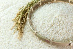 Cuối tuần, giá cà phê ổn định, giá lúa gạo và cao su tăng