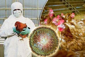 Dịch cúm gia cầm do virus H5N6 xuất hiện tại Campuchia