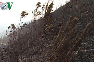 Lửa cháy rừng rực đốt rụi 60 ha rừng ở Co Mạ, Thuận Châu, Sơn La