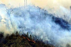Lào Cai: Xảy ra 2 vụ cháy lớn trong Vườn Quốc gia Hoàng Liên