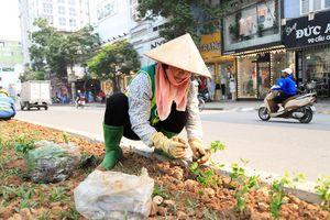 Công nhân trồng hoa dưới gầm đường sắt đô thị Nhổn - ga Hà Nội