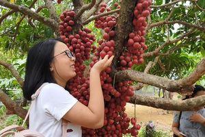 Lạ lẫm du lịch vườn đỏ ở Phú Yên