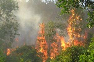 Nghi vấn cố tình đốt rừng gây ra 2 vụ cháy Vườn quốc gia Hoàng Liên