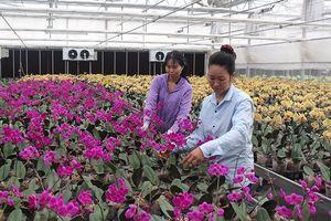 Gia tăng giá trị sản xuất hoa, cây cảnh vùng đồng bằng sông Hồng