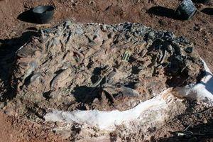 Xương khủng long, thằn lằn sấm 220 triệu năm xếp dày đặc trong hố chỉ vài m2