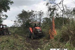Bà Rịa-Vũng Tàu: Cháy rừng liên tiếp tại khu vực núi Minh Đạm