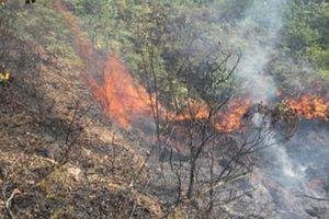 Cháy rừng tại khu vực núi Minh Đạm do nắng nóng kéo dài