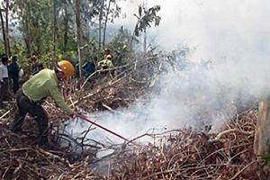 Quảng Nam nghiêm cấm việc đốt lửa trong rừng