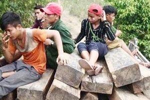 Khởi tố, bắt tạm giam các đối tượng phá rừng Phong Nha Kẻ Bàng
