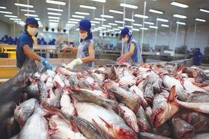 Nhiều 'ngôi sao mới nổi' của thị trường cá tra Việt