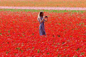 Hà Lan dựng rào chắn ngăn du khách dẫm nát hoa tulip để 'selfie'