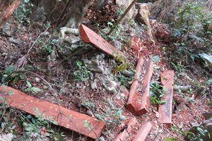 Khởi tố 7 đối tượng phá rừng ở VQG Phong Nha-Kẻ Bàng