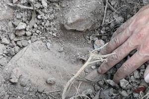 Vụ nhà máy rác chôn cất xác thai nhi: Cần có hướng xử lý từ gốc