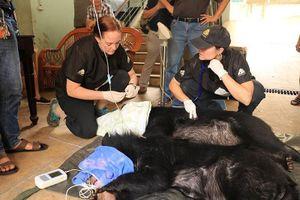 Sau phản ứng của khách, Rạp xiếc Trung ương bàn giao 2 'bé' gấu