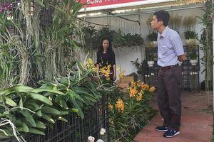 TPHCM có tiềm năng lớn trong trồng hoa lan xuất khẩu