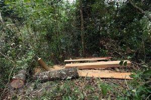 Khởi tố 7 đối tượng trong vụ phá rừng Vườn Quốc gia Phong Nha -Kẻ Bàng