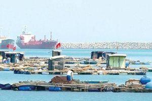 Quảng Ngãi: Chấm dứt việc nuôi cá lồng bè trong vùng biển thuộc Khu kinh tế Dung Quất