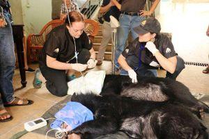 Cứu hộ hai cá thể gấu con tại Rạp xiếc Trung ương Hà Nội