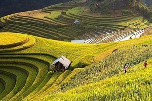 Check in Việt Nam qua những trải nghiệm vô giá