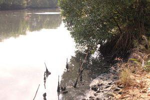 Sông, suối 'đen ngòm' ở Phú Quốc: Đề xuất đẩy nước ô nhiễm... ra biển