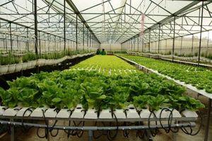 'Đỏ mắt' chờ nông nghiệp công nghệ cao