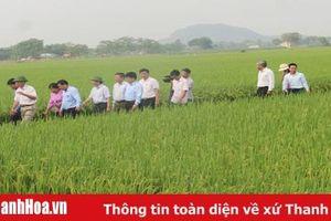Áp dụng gói kỹ thuật canh tác tiến tiến trong sản xuất lúa cho hiệu quả kinh tế cao