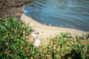 Sông Hàn bốc mùi hôi thối do nước thải nhà hàng