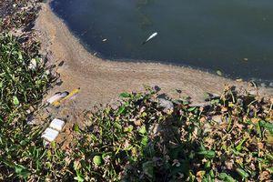 Đà Nẵng: Sông Hàn bốc mùi hôi thối do nước thải nhà hàng