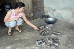 Liên tục bị xử phạt, trại bò của công ty Hòa Phát Quảng Bình vẫn làm khổ dân