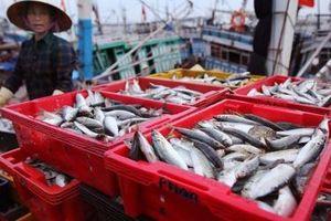 Thủy sản Việt triển khai các giải pháp cấp bách khắc phục 'thẻ vàng' EC