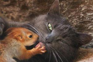 Tình bạn thân thiết khó tin giữa các loài động vật