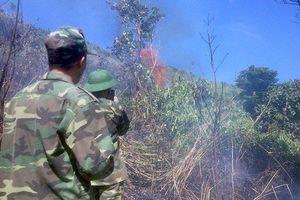 Cháy khoảng 6 ha rừng đặc dụng Đèo Cả