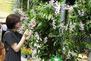'Rừng' hoa khoe sắc tại Festival hoa lan TP Hồ Chí Minh