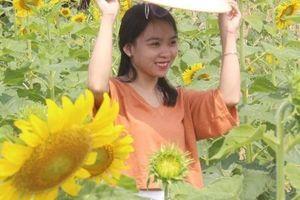 Du khách đội nắng, check in 'cánh đồng hoa Mặt trời' ở Huế