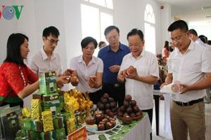 Sơn La phấn đấu xuất khẩu nông sản đạt 150 triệu USD năm 2019