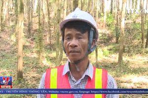 Hiệu quả trồng rừng bền vững theo chứng chỉ FSC
