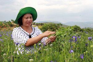 Lâm Hà (Lâm Đồng) - Hơn 40 năm vẫn nồng nàn Hà Nội