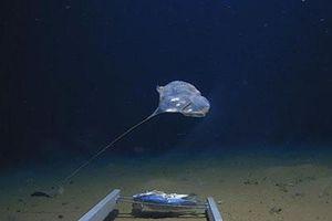 Phát hiện sinh vật bí ẩn ở vực sâu nhất của Ấn Độ Dương