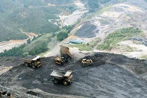 Quản lý bãi thải mỏ ở Việt Nam: Bài cuối - Thí điểm trồng cây năng lượng