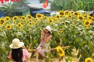 Hàng nghìn người đổ xô 'check in' cánh đồng hoa hướng dương tại Huế