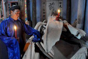 Mời chuyên gia phục dựng bộ xương cá voi 300 năm lớn nhất Việt Nam