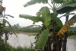 Thông tin mới nhất vụ phát hiện thi thể 3 người trên sông ở Thái Bình