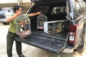 Kiểm lâm thả hàng chục con chim về môi trường tự nhiên