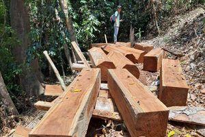 Quảng Nam: Phát hiện 2 vụ phá rừng tự nhiên