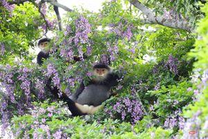 Vẻ đẹp 'lặng người' của Sơn Trà vào những mùa hoa